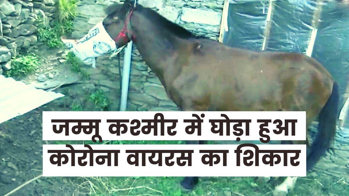 Corona Horse Jammu Kashmir
