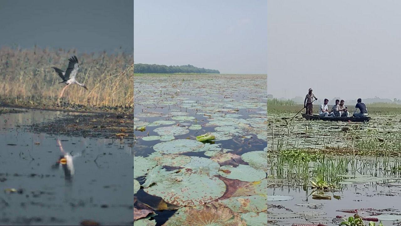 Kawar Lake Manjhaul