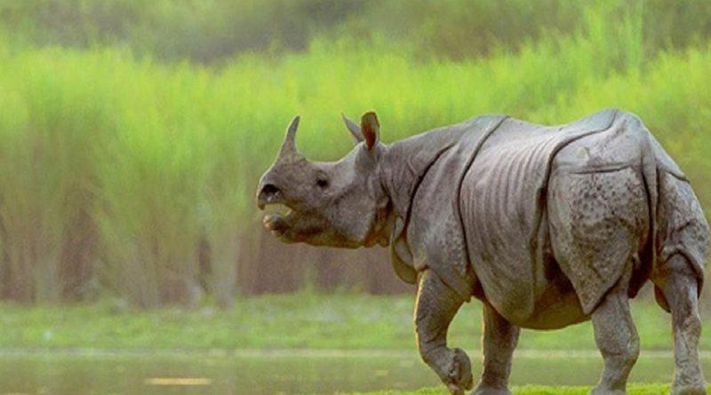 ayodhya rhino bihar