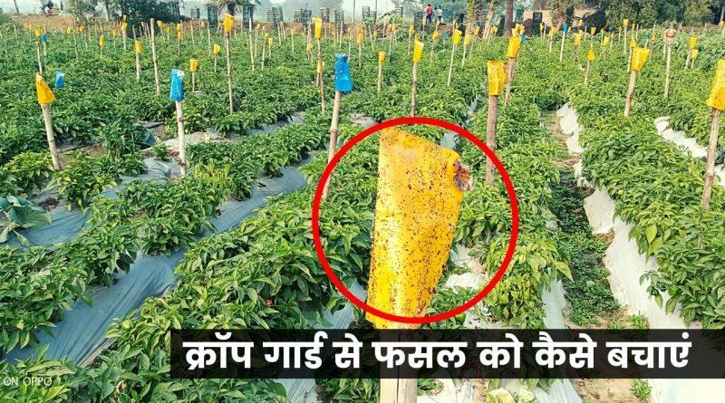 Crop Gaurd
