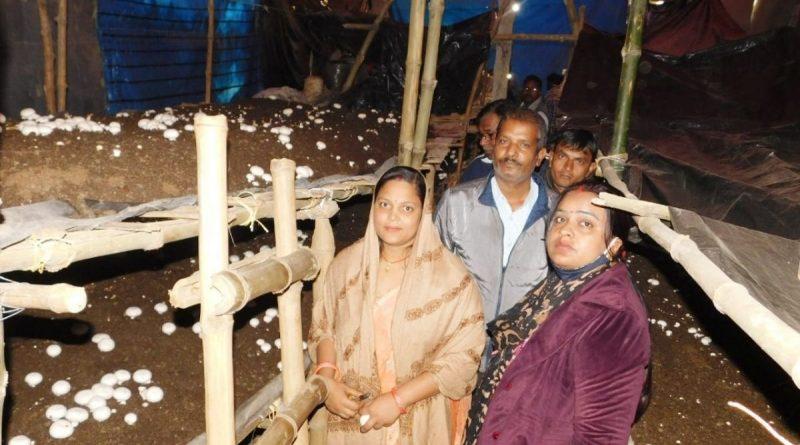 Mashroom Farming Begusarai