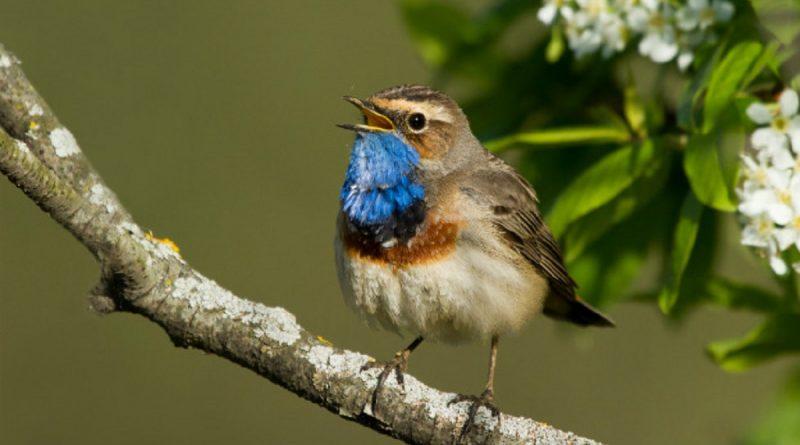 migratory birds in bihar