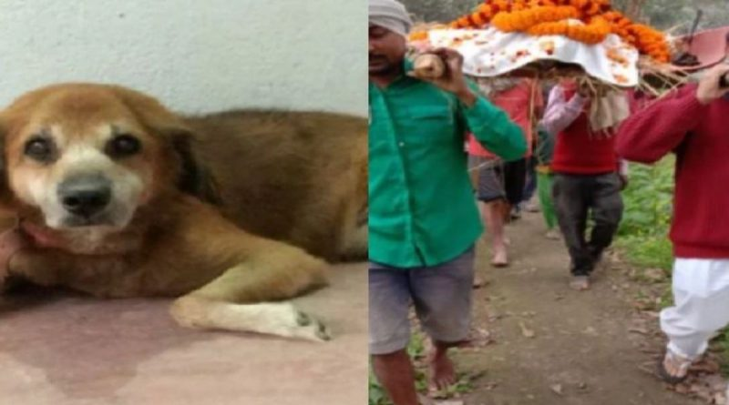 purniya dog cremated according hindu rituals