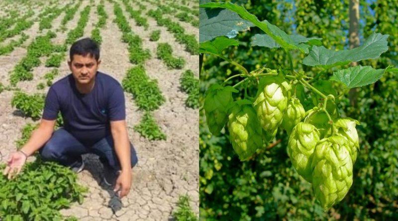 amresh hop shoots in bihar