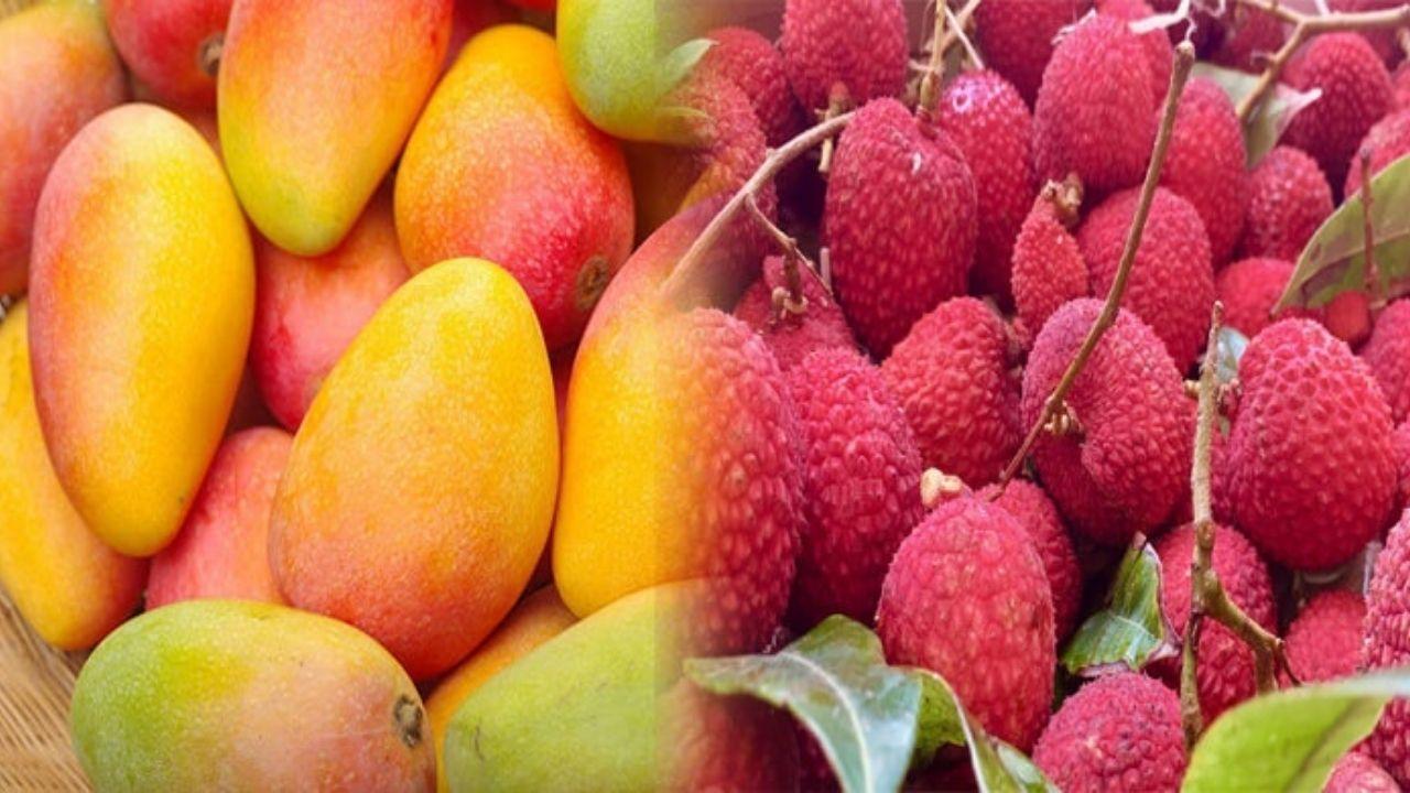 Litchi Mango
